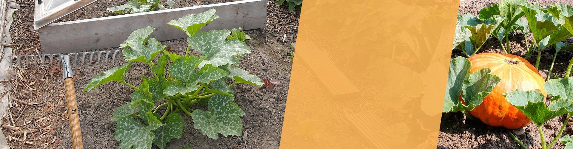 Préparer votre jardin potager